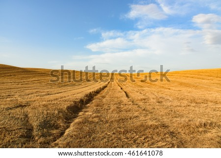Wheat field after harvesting against a blue sky with clouds