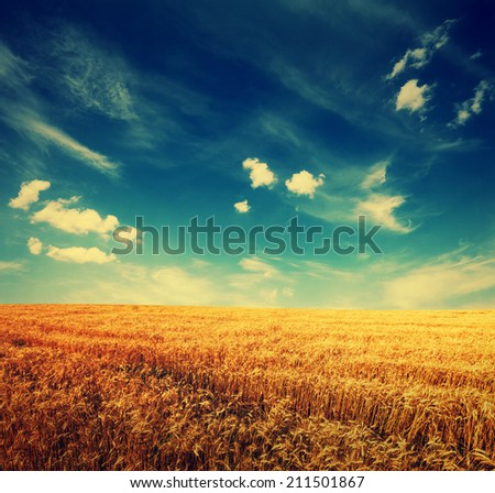 wheat field and clouds on sky, summer landscape with retro colors