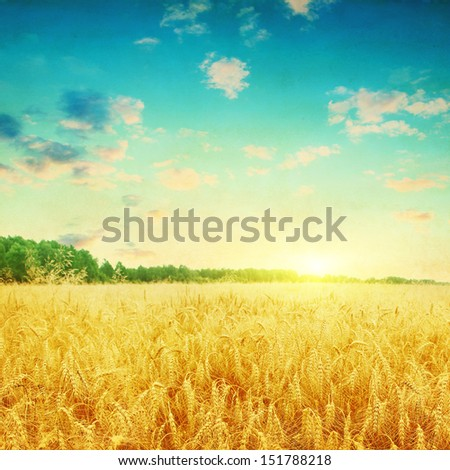 Wheat field and colorful sunset in grunge style. - stock photo