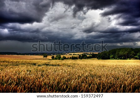 wheat field and storm clouds