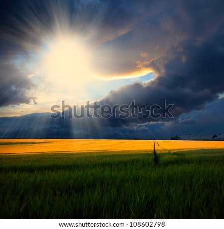 Wheat field at sunset with sun rays - stock photo