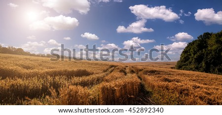 Wheat field. golden ears of wheat or rye on sky background with clouds, under the influence of sunlight. Rich harvest Concept. majestic rural landscape. installation of sunlight on the horizon. - stock photo