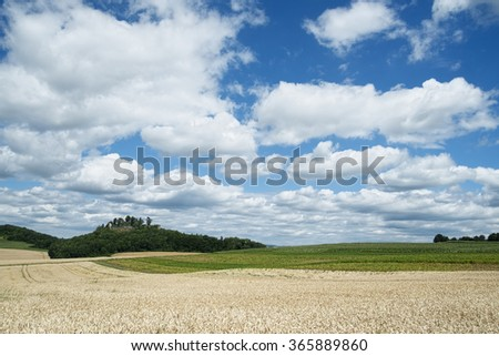 Wheat Field in hegau, germany