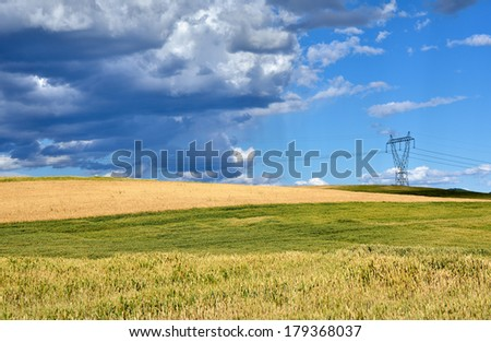 Wheat field in Macedonia