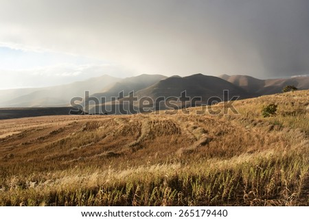 Wheat field in mountains before thunderstorm. Shot in Lesotho. - stock photo