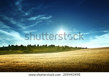wheat field in sunset time - stock photo