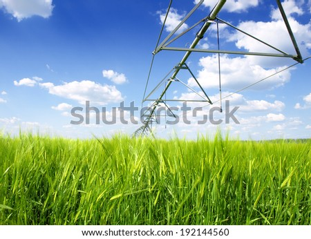 wheat field irrigated with a center pivot sprinkler system - stock photo