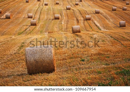 Wheat field landscape - stock photo