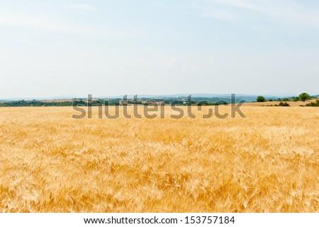 wheat field, mountains on the horizon - stock photo