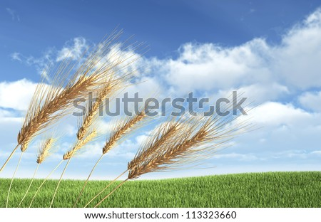 Wheat Field on Sky Background - High Quality Render - stock photo