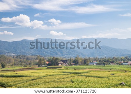 Wheat field on the hillside with beautiful clouds. - stock photo