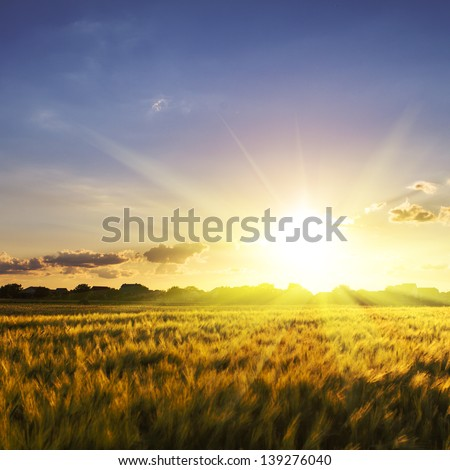 Wheat field over sky with sundown. Nature landscape - stock photo
