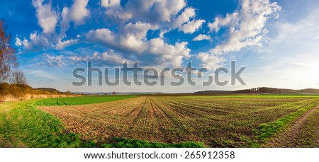 Wheat field panorama in south germany in spring - stock photo