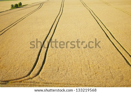 Wheat field, Summer in the Czech Republic - stock photo
