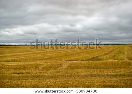 Wheat field, the reaped crop
