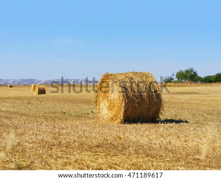 Wheat field with blue sky in background