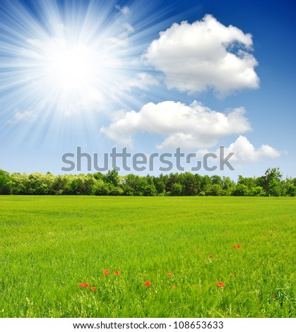 Wheat field with sunny sky
