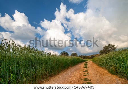 Wheat fields and a dirt road