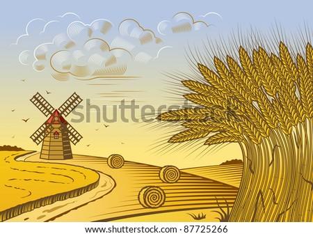 Wheat fields landscape - stock photo