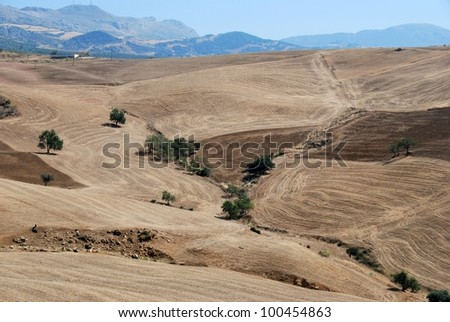 Wheat fields with mountains to the rear, Near Almogia, Costa del Sol, Malaga Province, Andalusia, Spain, Western Europe.
