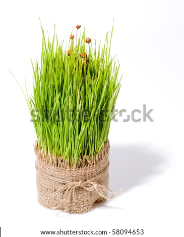 wheat for decoration - stock photo