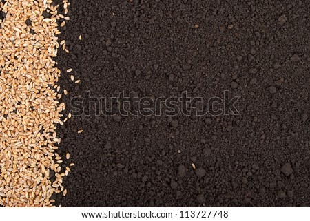 Wheat grain on the soil - stock photo