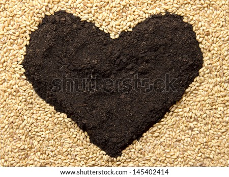 Wheat grains and earth heart - stock photo