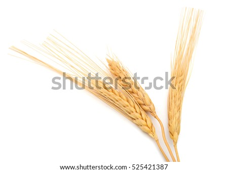wheat grains isolated white