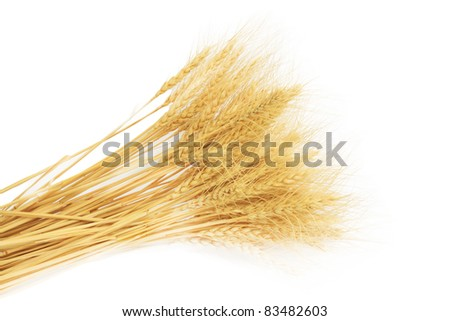 wheat grass isolated over white background - stock photo