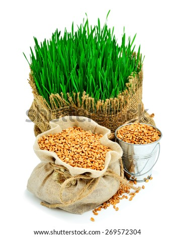 Wheat grass, wheat grains in the sack isolated on white background - stock photo