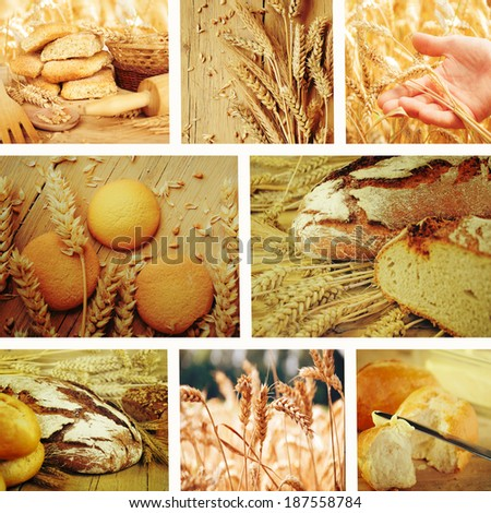 Wheat.Harvest concepts.Cereal collage  - stock photo