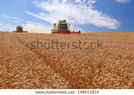 Wheat harvester in action - stock photo