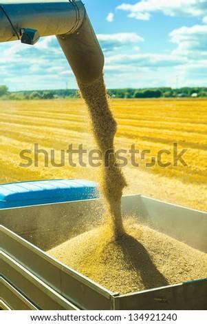 wheat harvesting - stock photo