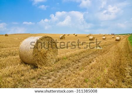 wheat harvesting in summer season - stock photo