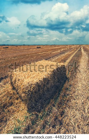 Wheat hay straw bales in field after harvest, retro toned image