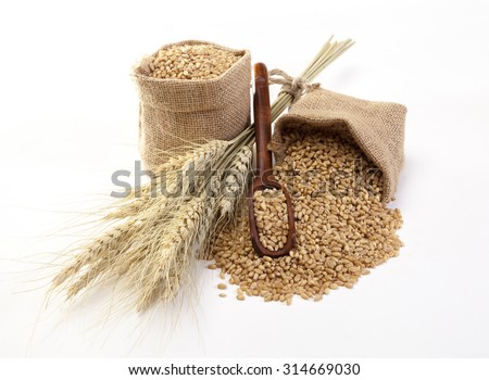 Wheat in sackcloth bags on the white background. - stock photo