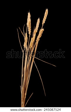 wheat isolated on black - stock photo