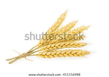 Wheat isolated on white. - stock photo
