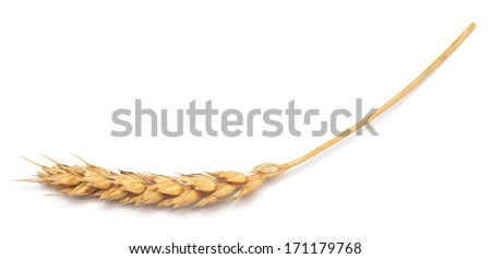 wheat isolated on white background - stock photo