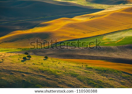 Wheat land at sunrise, Palouse, WA - stock photo