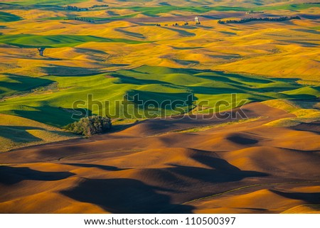 Wheat land at sunset, Palouse, WA