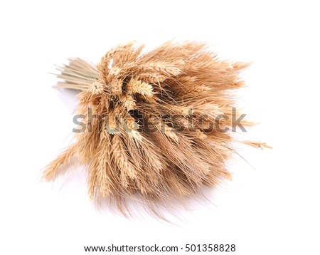 Wheat on a white background