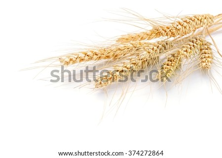 wheat on the white background.. - stock photo