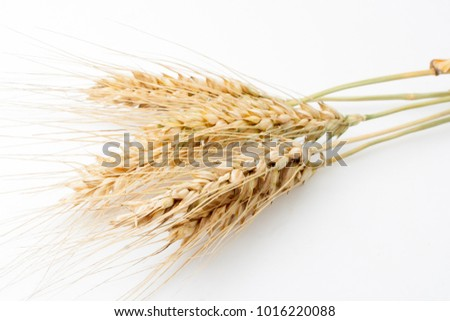 Wheat on white background