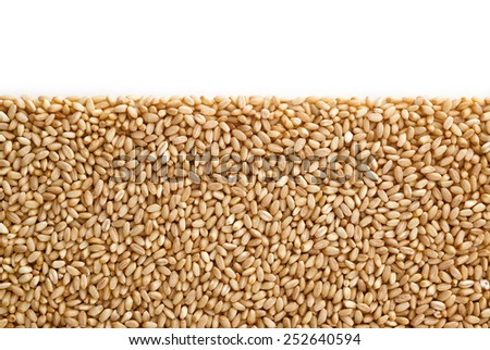 Wheat pile heap,  isolated on white background with copy space - stock photo