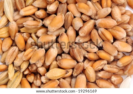 wheat seeds as background