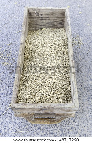 Wheat seeds, detail of a container with cerals collected, seeds and healthy living foods - stock photo