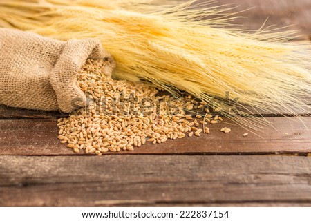 wheat seeds in a canvas sack on a wooden surface - stock photo