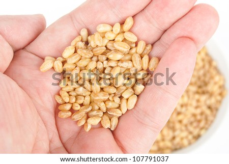 Wheat seeds in bowl