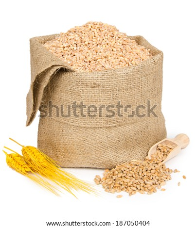 Wheat seeds, spikes and bag isolated on white - stock photo